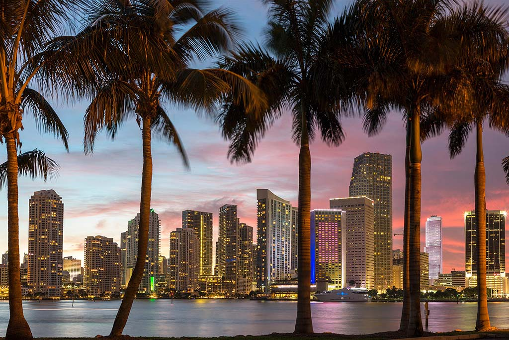 Miami Skyline and Palm Trees at Dusk